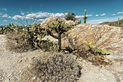 Rincon Mountains Wall Art - Photograph - Desert Reality by George Buxbaum