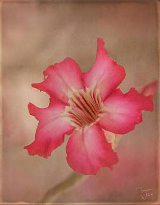 Digital Art - Desert Rose by Teresa Wilson