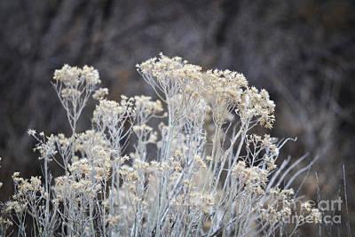 Photograph - Desert Sage Rustic Desert Nature by Andrea Hazel Ihlefeld