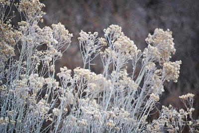 Photograph - Desert Sage Rustic Nature Landscape by Andrea Hazel Ihlefeld