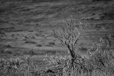 Photograph - Desert Sagebrush Bw by Rick Mosher