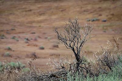 Wood Photograph - Desert Sagebrush  by Rick Mosher