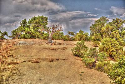 Photograph - Desert Scape by Richard J Cassato