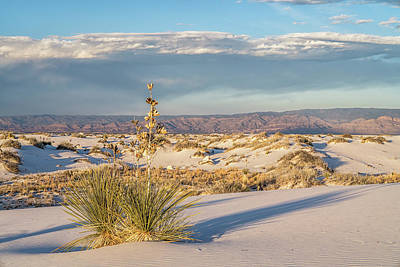 Photograph - Desert Scene by Framing Places