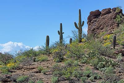 Photograph - Desert Sentinels by Nikolyn McDonald