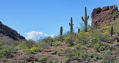 Photograph - Desert Sentinels - Panorama by Nikolyn McDonald