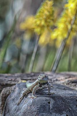 Photograph - Desert Spiny Lizard 5796-041018-1cr by Tam Ryan