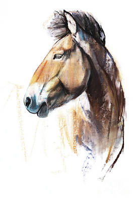 Portraits Pastel - Desert Spirit Przewalski by Mark Adlington