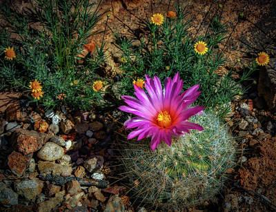 Photograph - Desert Splash by Elaine Malott