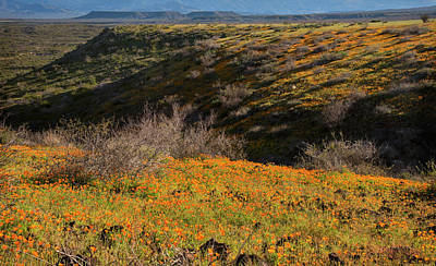 Orange Photograph - Desert Spring Flowers by Dave Dilli