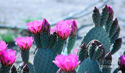 Photograph - Desert Spring by Marcia Breznay