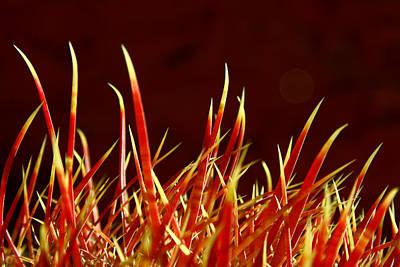Photograph - Desert Spring11 by Mark  Ross