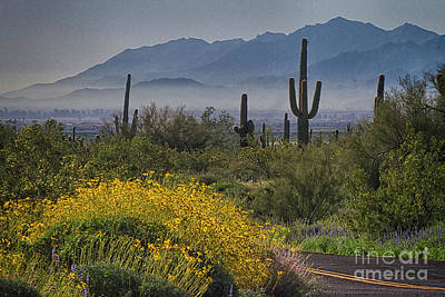 Photograph - Desert Springtime by Anne Rodkin