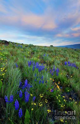 Photograph - Desert Springtime by Mike Dawson