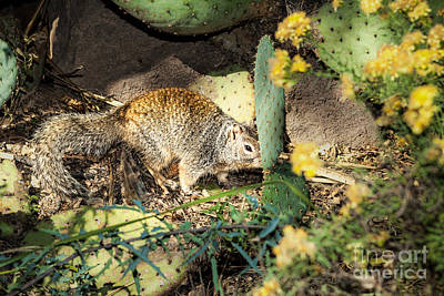 Photograph - Desert Squirrel by Lawrence Burry