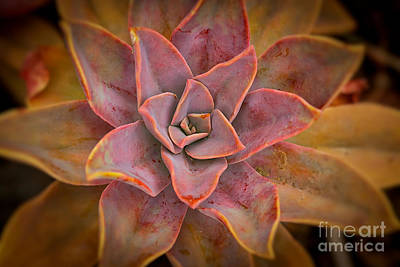 Photograph - Desert Star by Ana V Ramirez