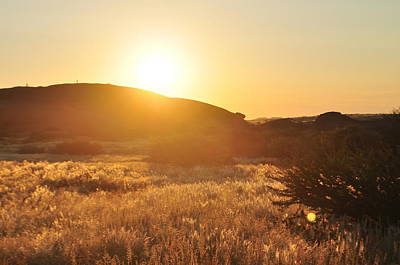Photograph - Desert Sun by Joe  Burns