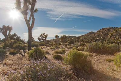 Photograph - Desert Sun by Matthew Bamberg