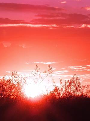 Photograph - Desert Sunrise In Red by Judy Kennedy