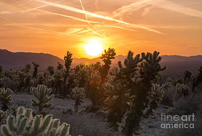 Photograph - Desert Sunrise by Juli Scalzi