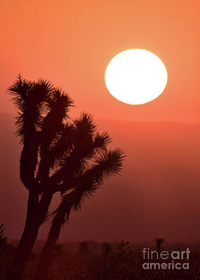 Photograph - Desert Sunrise by Vincent Bonafede