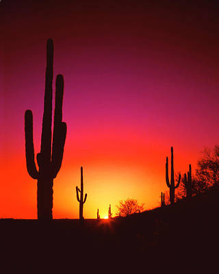Desert Sunset Wall Art - Photograph - Desert Sunset by Frank Houck