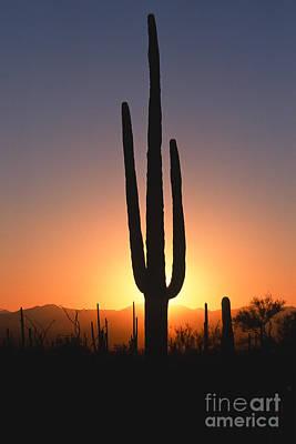 Photograph - Desert Sunset by Sandra Bronstein