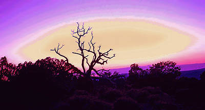 Desert Sunset With Silhouetted Tree 2 Print by Steve Ohlsen
