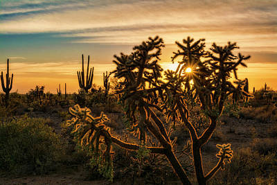 Photograph - Desert Sunshine Shining Through  by Saija Lehtonen