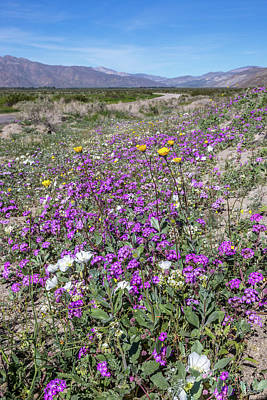 Desert Super Bloom Print by Peter Tellone
