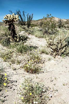 Photograph - Desert Super Walkabout by Daniel Hebard