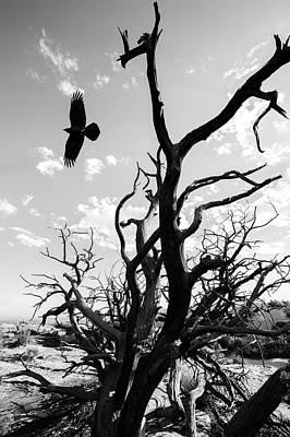 Photograph - Desert Takeoff by Nathan Larson