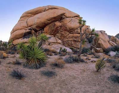 Photograph - Desert Tortoise Rock Formation by Paul Breitkreuz