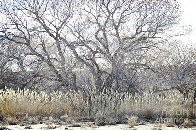 Art Print featuring the photograph Desert Tree Willows by Andrea Hazel Ihlefeld