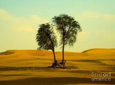 Desert Trees Art Print