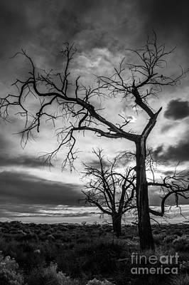 Photograph - Desert Trees Evening Sunset by Cathie Richardson