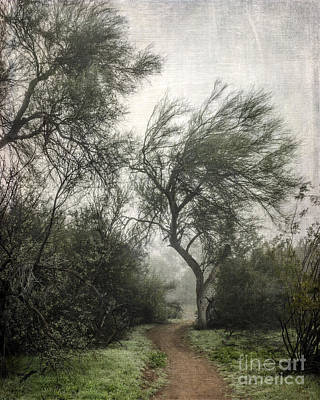 Photograph - Desert Trees In Fog by Tamara Becker
