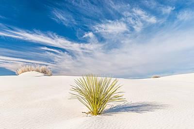Desert Trio - White Sands National Monument Photograph Art Print