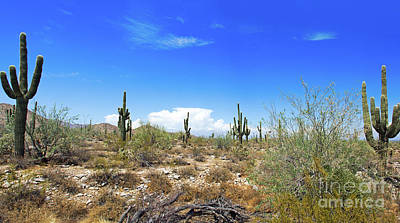 Photograph - Desert View by Bob Hislop