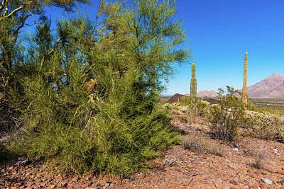 Photograph - Desert View by Edward Peterson