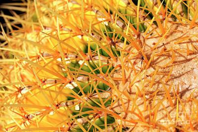Photograph - Desert Web by John Rizzuto