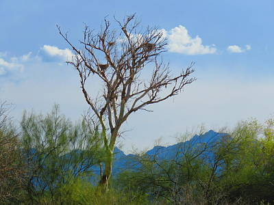 Photograph - Desert Wetlands Paradise by Judy Kennedy