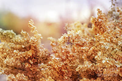 Photograph - Desert Wheat Botanical by Cathie Richardson