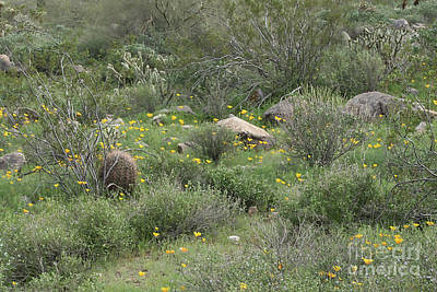 Photograph - Desert Wildflowers by Anne Rodkin