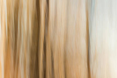 Photograph - Desert Wind by Davin McLaird
