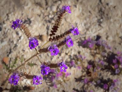 Desert Zig Zag Purple Flower Art Print