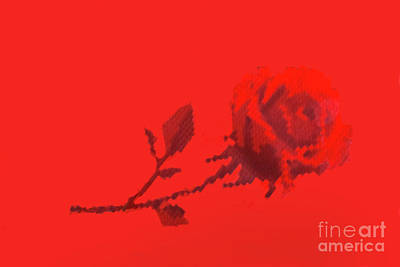 Photograph - Designer Red Rose by Linda Phelps