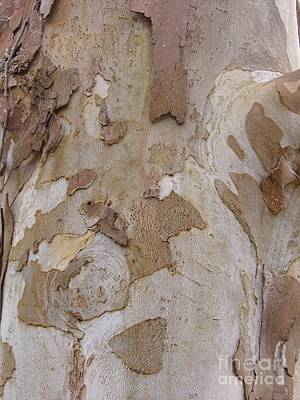 Photograph - Designs In The Tree Bark by D Hackett