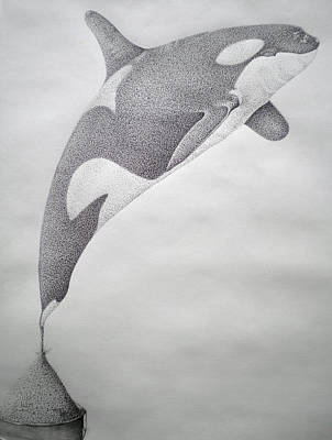 Orca Drawing - Desintigrating Orca by Mayhem Mediums