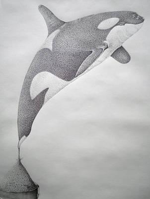 Orca Drawing - Desintigrating Orca by Mayhem Mediums